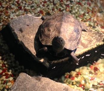 Turtle <3